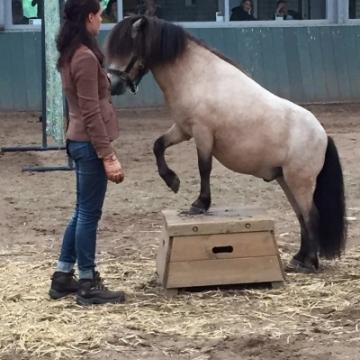 Penny's Pony Plezier 10